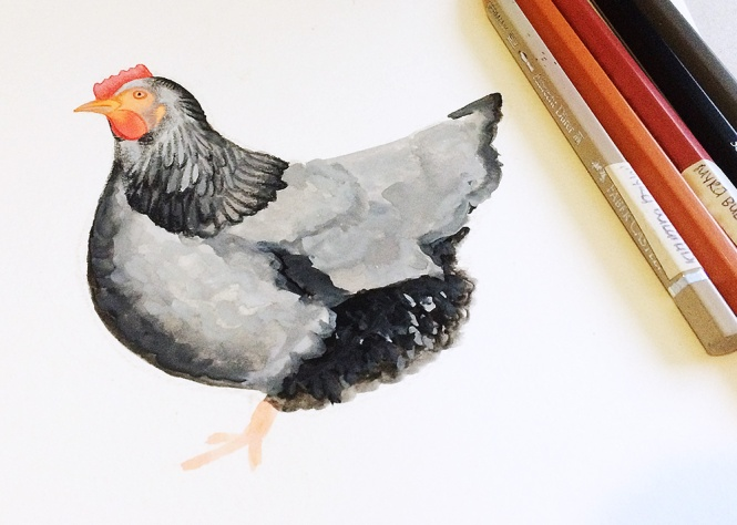 chicken-commission-WIP